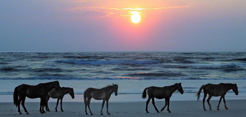Oceanfront Homes For Rent Carolina Beach Nc Circuit